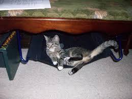 simple cat hammock 4 steps