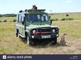 jeep safari rack jeep safari tour tourists taking photographs of cheetas kenya