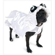 White Dog Halloween Costume 13 Halloween Pet Costume Winners 2010 Lady Gaga Dominatrix
