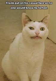 funny cat meme meme cat and animal fun