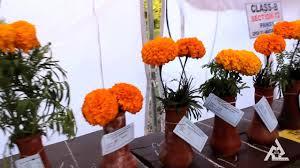 flowers garden city rose festival flowers exhibition zakir rose garden city
