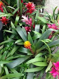 180 best tropical plants full sun images on pinterest flowers