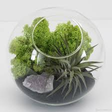 best round succulent terrarium kit with air plant moss indoor