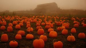 jackolantern screensavers pumpkin backgrounds
