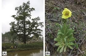 native plants in china número especial sobre ecología evolución y conservación en las