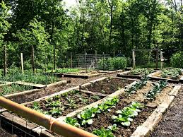 raised garden beds for sale garden garden beds inspirational raised garden beds pros cons