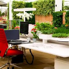 plants for office buy plant for office desk online at nursery live largest plant