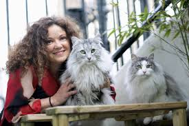 common skin complaints in cats
