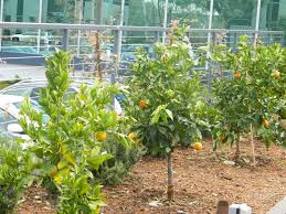 gardenenvy corporate edible garden works for employees