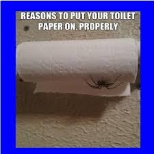 Toilet Paper Roll Meme - spider toilet