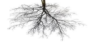 roots natural roots hydroponics u0026 organic gardening