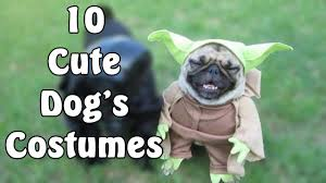 top 10 pugs in awesome costumes youtube