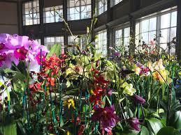 orchids for sale orchid sale daniel stowe botanical garden
