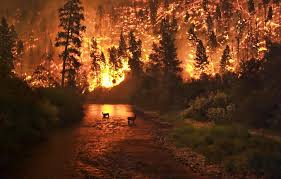 Type 1 Wildfire Definition by 10 Deadliest Natural Disasters By Type