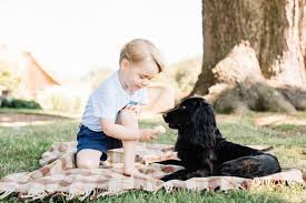 feed dog ice cream rspca advice prince george