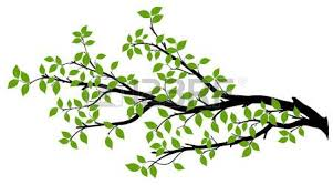 tree branch stock photos royalty free business images