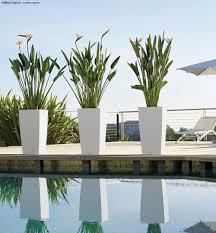 Self Watering Patio Planters by Cubico Planters With Heliconia Plants Island Landscape U0026 Nursery