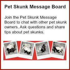 stomp pet skunk diet chicken