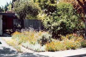 Small Urban Garden - pacific horticulture society a small urban native wildflower garden