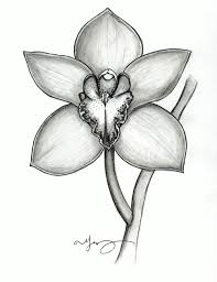 What Is An Orchid Flower - orchids ids