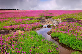 top 5 most beautiful valley of flowers in india