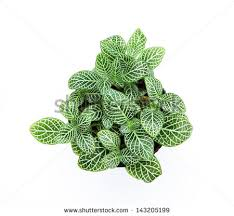 ornamental plants stock images royalty free images vectors