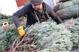 christmas tree seller takes on big boxes with fraser firs home