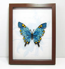 3d paper quilling blue butterfly picture with frame