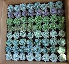 theme wedding favors canada 2 succulents in bulk 128 in 2 plastic bins for 168 becoming a