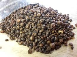 celastrus paniculatus seeds world seed supply