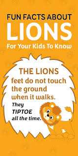Interesting Ideas How Much To by Fun Facts And Interesting Information About Lions For Kids