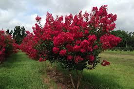 Best Fruit Trees For North Carolina - worthington farms inc