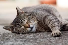 cat purr your furry friend u0027s noise online u0026 free