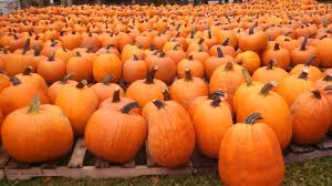 Pumpkin Patch Frisco Tx by Allen Tx Homes For Sale Search Mckinney Tx Real Estate Speed