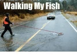 Funny Fish Memes - 25 best memes about fuck fish fuck fish memes