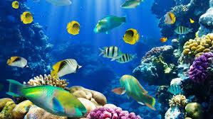 nature fish coral reef exotic wallpaper 1920x1080 260738