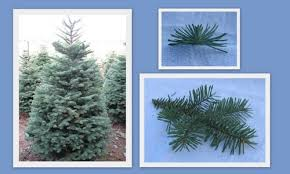 christmas tree home delivery la westcoastconcierge