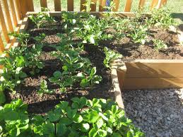 Vegetable Garden Layouts by Lovely Small Vegetable Garden Ideas On A Budget Gardening Site