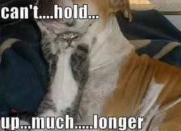 Cat And Dog Memes - 10 hilarious memes of the relationship between cats and dogs
