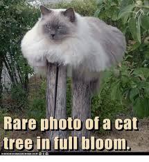 Tree Meme - rare photo of a cat tree in full bloom cats meme on me me