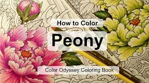 the color book how to color peony coloring book color odyssey by chris