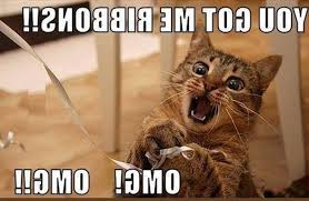 Newest Funny Memes - grumpy silly cat memes newest funny cute adorable all time
