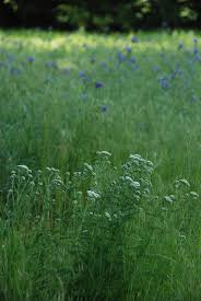 native plant database gaia garden february 2014