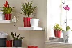 home plants pictures home pictures