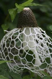 Types Of Garden Fungus - 13 most bizarre mushrooms treehugger