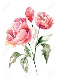 beautiful flowers watercolor painting stock photo picture and