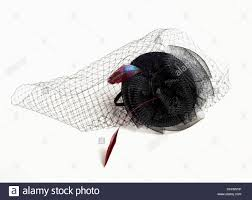 funeral hat black teardrop funeral hat with veil and feathers stock photo