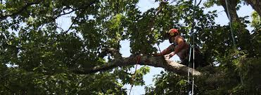 vermont tree selection buying high quality trees