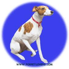 greyhound figurines statues and gifts plus gifts by