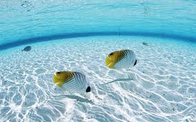 Water Wallpapers Hd Desktop Wallpapers Fish Wallpaper Hd Wallpaper Wiki